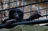 Berlin Zoo. Who is in the cage?